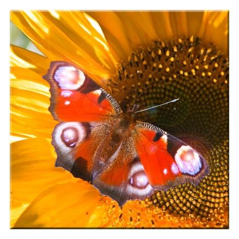 Eglo 75037 - Obraz s LED podsvícením BUTTERFLY 4xLED/0,02W